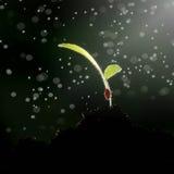 Рост зеленых растений Стоковая Фотография RF