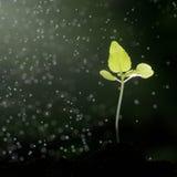 Рост зеленых растений Стоковое Изображение RF
