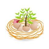 Рост и зеленая концепция с яичками и гнездом Стоковые Фото