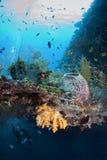 рост коралла многоплодный Стоковые Изображения RF