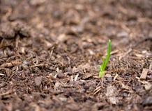 рост новый Стоковая Фотография RF