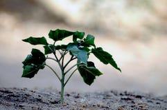 рост новый Стоковое Изображение