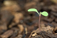рост новый Стоковые Изображения