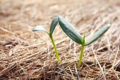 рост новый Стоковая Фотография