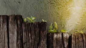 Рост папоротника на древесине с водой в саде Стоковая Фотография