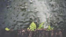 Рост папоротника на древесине с водой в саде Стоковое Изображение