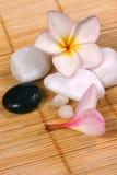ротанг камушков frangipane цветка предпосылки Стоковые Изображения