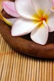 ротанг frangipane цветка предпосылки Стоковые Фото