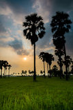 Роща ладони и Солнце Стоковые Фото