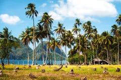 Роща ладони на береге моря Тропическая страна Стоковое фото RF
