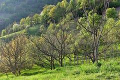Роща грецкого ореха Стоковые Изображения RF