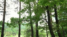 Роща дуба на банке озера горы конец вверх Дальний план акции видеоматериалы
