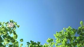 Роща дуба на банке озера горы конец вверх Дальний план сток-видео