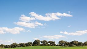 Роща дуба на поле зеленой травы, под голубым небом весной стоковая фотография rf