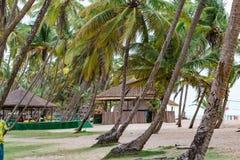 Роща кокоса в пляжном комплексе Lekki Лагосе Нигерии Campagne Ла стоковые фото