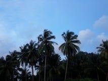 Роща кокоса Стоковые Изображения RF