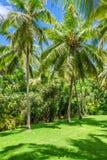Роща кокосовой пальмы Стоковые Изображения