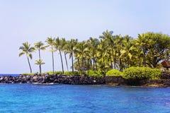 Роща ладони кокоса в Гаваи на заливе Kona стоковое изображение rf