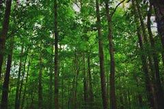 Роща на парке штата Северной Каролины стоковое фото rf