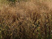 Роща осени Стоковая Фотография RF