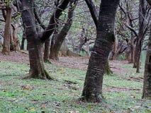 Роща осени Стоковые Фото
