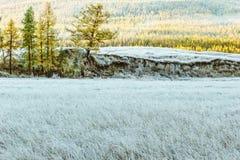 Роща тополя рано утром стоковое изображение rf