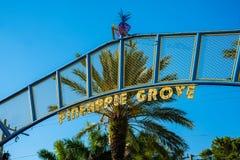 Роща Delray Beach ананаса Стоковое Изображение RF
