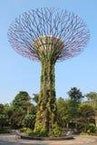 Роща Supertree в Сингапуре Стоковая Фотография