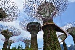 Роща Supertree на садах заливом в Сингапуре Стоковое фото RF