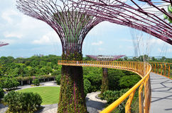 Роща Supertree на садах заливом в Сингапуре Стоковые Фотографии RF