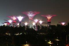 Роща Supertree ночи в Сингапуре Стоковая Фотография