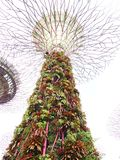 Роща Supertree Стоковое Фото