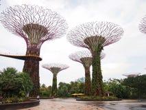 Роща Supertree Стоковые Изображения RF
