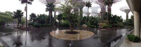 Роща Supertree Стоковые Фотографии RF
