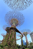 Роща Supertrees на садах заливом Стоковое Фото