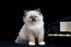 рояль черного котенка следующий к бархату стоковое фото