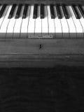 рояль Стоковая Фотография RF