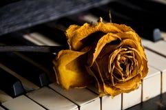 Рояль с поднял на ключи Стоковое Изображение RF