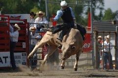 Родео: Бой Bull Стоковые Изображения