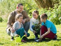 Родители при 2 дет засаживая куст Стоковая Фотография RF
