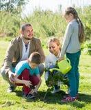 Родители при 2 дет засаживая куст Стоковая Фотография