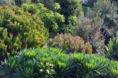 Родной австралийский сад Стоковое Изображение