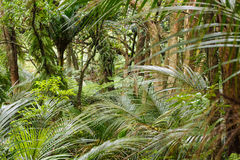 Родной тропический лес на растояния Waitakere Стоковые Изображения RF