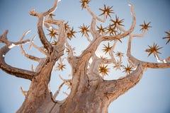 Родовое дерево колчана снятое от динамического угла Стоковое Изображение RF