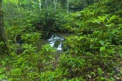 Рододендрон & водопады, Greenbrier, большие закоптелые горы NP Стоковая Фотография RF