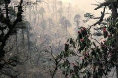 Рододендрон в лесе Стоковое Фото