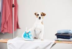 Рубашка собаки утюжа Стоковая Фотография