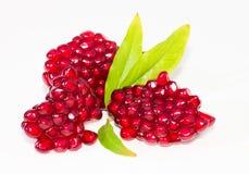 Рубиновые зерна венисы стоковые фото