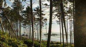 Рубиновый лес пляжа Стоковые Изображения RF