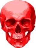Рубиновый череп человека Стоковые Фото
